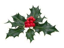 Φύλλα της Holly στοκ φωτογραφία με δικαίωμα ελεύθερης χρήσης