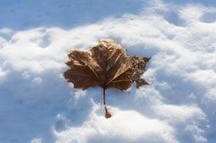 Φύλλα του κρύου Στοκ Φωτογραφίες