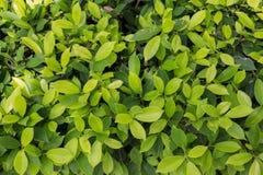 Φύλλα του Μπους Στοκ φωτογραφία με δικαίωμα ελεύθερης χρήσης