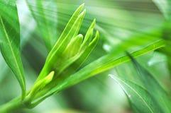 Νέα πράσινα φύλλα στις ακτίνες ήλιων Στοκ Εικόνα