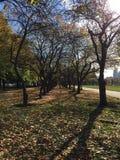 Φύλλα του Σικάγου Στοκ Φωτογραφία