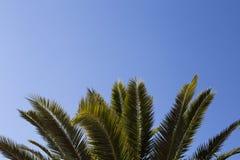 Φύλλα του φοίνικα στο μπλε ουρανό διάστημα αντιγράφων Στοκ Εικόνα