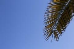 Φύλλα του φοίνικα στο μπλε ουρανό διάστημα αντιγράφων Στοκ φωτογραφία με δικαίωμα ελεύθερης χρήσης