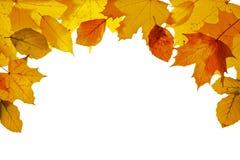 Φύλλα το φθινόπωρο Στοκ φωτογραφία με δικαίωμα ελεύθερης χρήσης