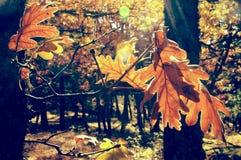 Φύλλα το φθινόπωρο Στοκ Φωτογραφίες