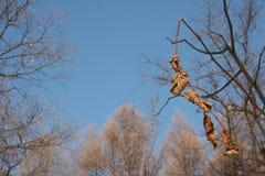 Φύλλα το χειμώνα Στοκ εικόνες με δικαίωμα ελεύθερης χρήσης