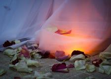 Φύλλα τριαντάφυλλων Στοκ φωτογραφία με δικαίωμα ελεύθερης χρήσης