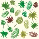 φύλλα τροπικά διάνυσμα, άνευ ραφής, υπόβαθρο σχεδίων Στοκ φωτογραφίες με δικαίωμα ελεύθερης χρήσης
