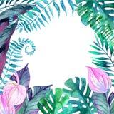 φύλλα τροπικά floral απεικόνιση σχεδίου ανασκόπησής σας Στοκ Φωτογραφία