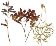 Φύλλα των διάφορων λουλουδιών και των δέντρων Στοκ εικόνα με δικαίωμα ελεύθερης χρήσης