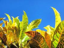 Φύλλα των τροπικών φυτών ενάντια στον ουρανό Στοκ Εικόνες