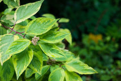 φύλλα υγρά Στοκ Φωτογραφία