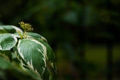 φύλλα υγρά Στοκ φωτογραφίες με δικαίωμα ελεύθερης χρήσης