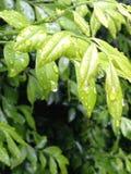 φύλλα υγρά Στοκ εικόνα με δικαίωμα ελεύθερης χρήσης