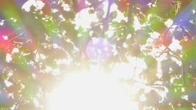 Φύλλα υποβάθρου και sunrays απόθεμα βίντεο