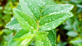 Φύλλα υποβάθρου Στοκ Εικόνες
