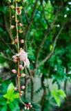Φύλλα υπόστεγων Στοκ Φωτογραφία