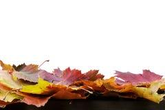 Φύλλα φθινοπώρου για τη σύνθεση συνόρων, που απομονώνεται επάνω Στοκ φωτογραφία με δικαίωμα ελεύθερης χρήσης