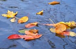 Φύλλα φθινοπώρου κίτρινα και κόκκινα στο νερό Στοκ Εικόνα