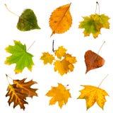 Φύλλα φθινοπώρου καθορισμένα απομονωμένα στο άσπρο υπόβαθρο Στοκ εικόνα με δικαίωμα ελεύθερης χρήσης