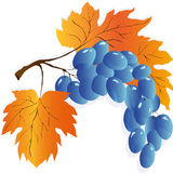 Φύλλα φθινοπώρου καθορισμένα, διανυσματική απεικόνιση Στοκ εικόνα με δικαίωμα ελεύθερης χρήσης