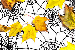 Φύλλα φθινοπώρου και μαύρο spiderweb ως υπόβαθρο αποκριών Στοκ φωτογραφία με δικαίωμα ελεύθερης χρήσης