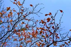 Φύλλα φθινοπώρου, κλαδίσκοι Στοκ Φωτογραφία