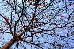 Φύλλα φθινοπώρου, κλαδίσκοι Στοκ φωτογραφία με δικαίωμα ελεύθερης χρήσης