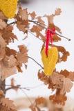 Φύλλα φθινοπώρου με τους σπόρους πουλιών Στοκ εικόνα με δικαίωμα ελεύθερης χρήσης