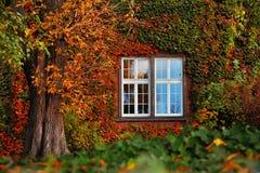 Φύλλα φθινοπώρου με το άσπρο παράθυρο Στοκ Εικόνες