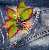 Φύλλα φθινοπώρου με των σταφυλιών Στοκ εικόνα με δικαίωμα ελεύθερης χρήσης