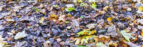Φύλλα φθινοπώρου πανόραμα στοκ εικόνες με δικαίωμα ελεύθερης χρήσης