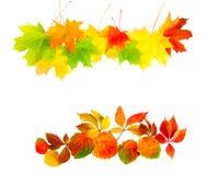Φύλλα φθινοπώρου που απομονώνονται σε μια άσπρη ανασκόπηση Στοκ Φωτογραφίες
