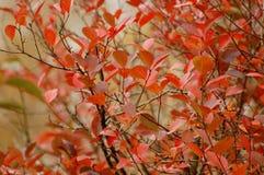Φύλλα φθινοπώρου, πολύ ρηχή εστίαση Στοκ Φωτογραφία