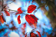 Φύλλα φθινοπώρου σε έναν κλάδο Στοκ εικόνα με δικαίωμα ελεύθερης χρήσης
