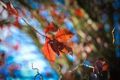 Φύλλα φθινοπώρου σε έναν κλάδο Στοκ εικόνες με δικαίωμα ελεύθερης χρήσης
