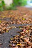 Φύλλα φθινοπώρου σε ένα πεζοδρόμιο πόλεων Στοκ Φωτογραφίες