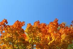 Φύλλα φθινοπώρου στα δέντρα στο υπόβαθρο ουρανού Στοκ Φωτογραφία