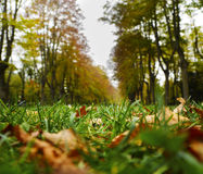 Φύλλα φθινοπώρου στην Καταλωνία Στοκ εικόνες με δικαίωμα ελεύθερης χρήσης