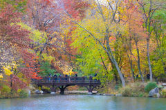 Φύλλα φθινοπώρου στην κεντρική πόλη της Νέας Υόρκης πάρκων Στοκ Εικόνες
