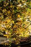 Φύλλα φθινοπώρου στην κορυφή στεγών Στοκ φωτογραφία με δικαίωμα ελεύθερης χρήσης