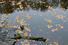 Φύλλα φθινοπώρου στη δασική λίμνη Στοκ φωτογραφία με δικαίωμα ελεύθερης χρήσης