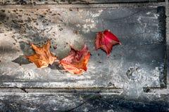 Φύλλα φθινοπώρου στη βρώμικη πέτρα Στοκ φωτογραφίες με δικαίωμα ελεύθερης χρήσης