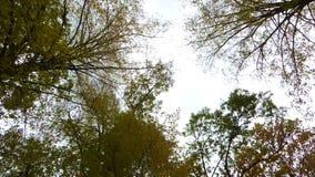 Φύλλα φθινοπώρου στον αέρα απόθεμα βίντεο