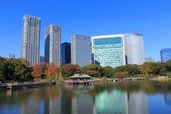 Φύλλα φθινοπώρου στους κήπους Hamarikyu, Τόκιο στοκ εικόνα