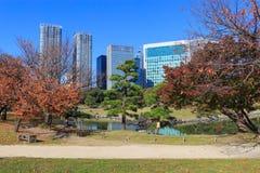 Φύλλα φθινοπώρου στους κήπους Hamarikyu, Τόκιο στοκ εικόνες