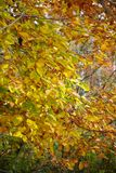 Φύλλα φθινοπώρου στο δάσος στοκ φωτογραφίες