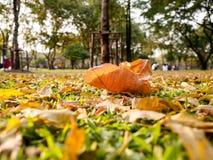 Φύλλα φθινοπώρου στο έδαφος Στοκ Εικόνες