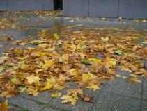 Φύλλα φθινοπώρου στο κέντρο πόλεων του Βερολίνου Στοκ Φωτογραφία
