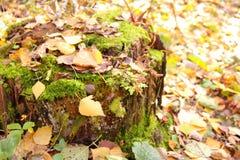 Φύλλα φθινοπώρου στο κολόβωμα Στοκ Φωτογραφία